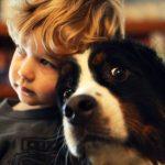 Un perro puede ser víctima de violencia machista