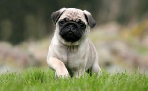 4 enfermedades caninas comunes por alimentar mal a tu perro