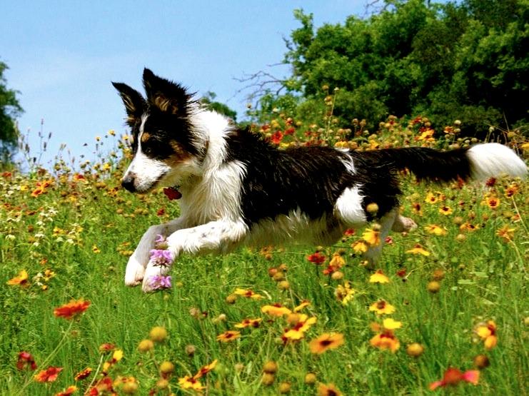 Cómo prevenir el cáncer en perros