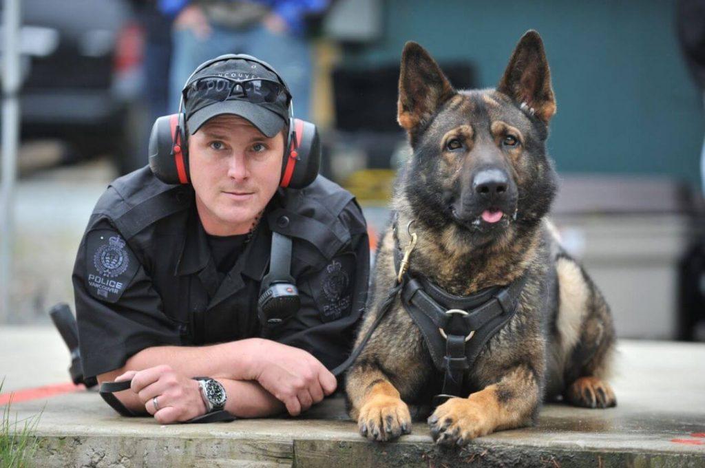 Adopción de perros policía en España