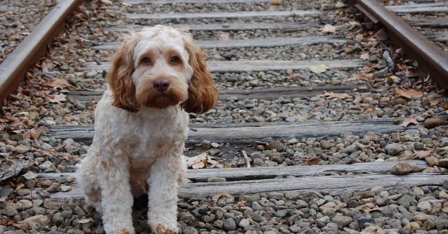 adopción perros abandonados argentina