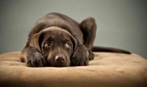 abandono perros