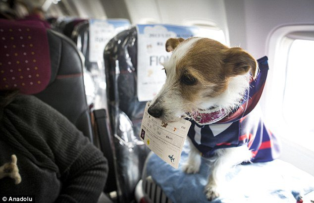 aerolinea japonesa permite viajar con mascotas en cabina