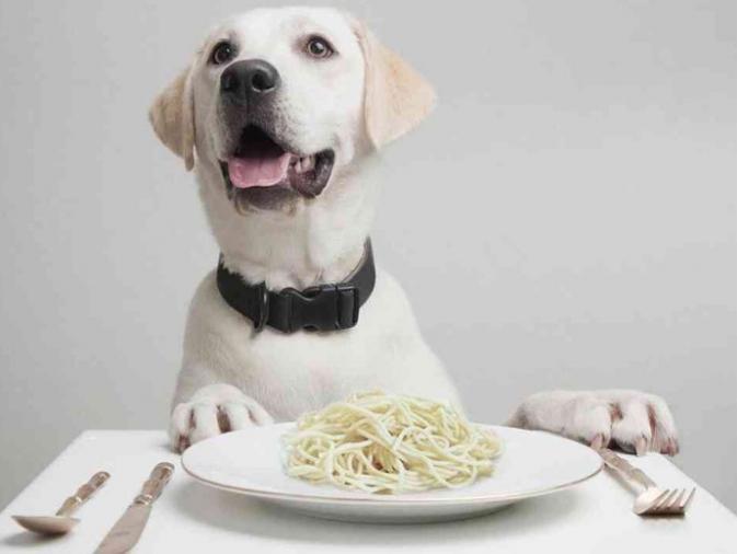 Alimentación de perros senior