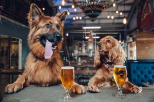 brewdog cerveza