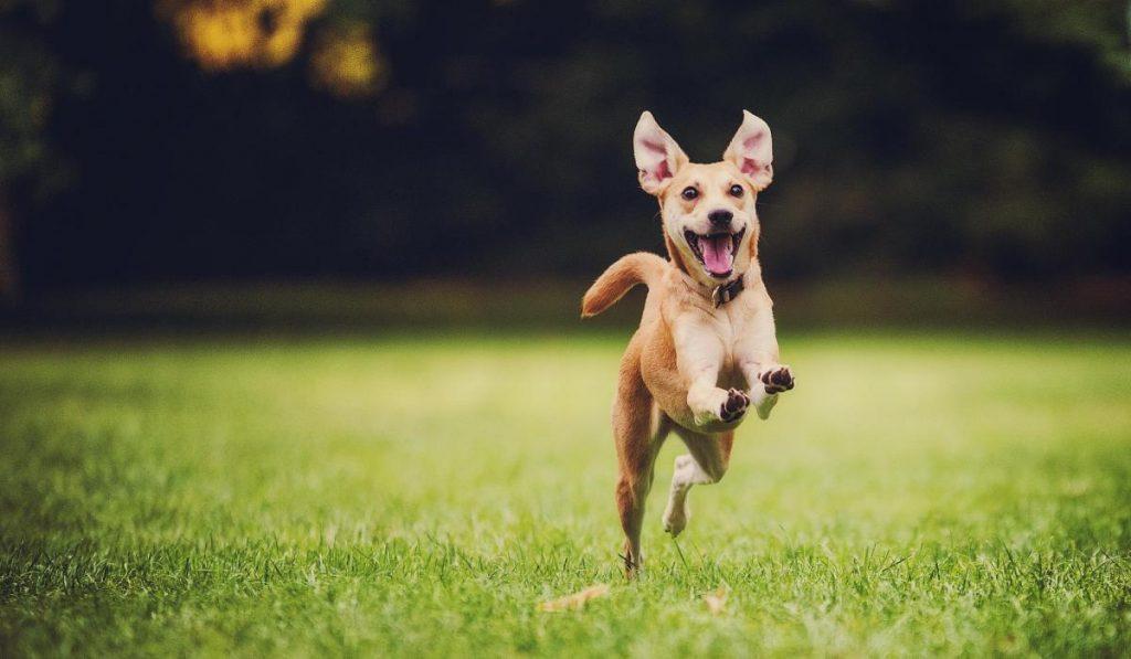 Castra a tu perro