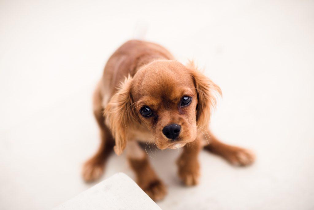 causa de los gases en los perros
