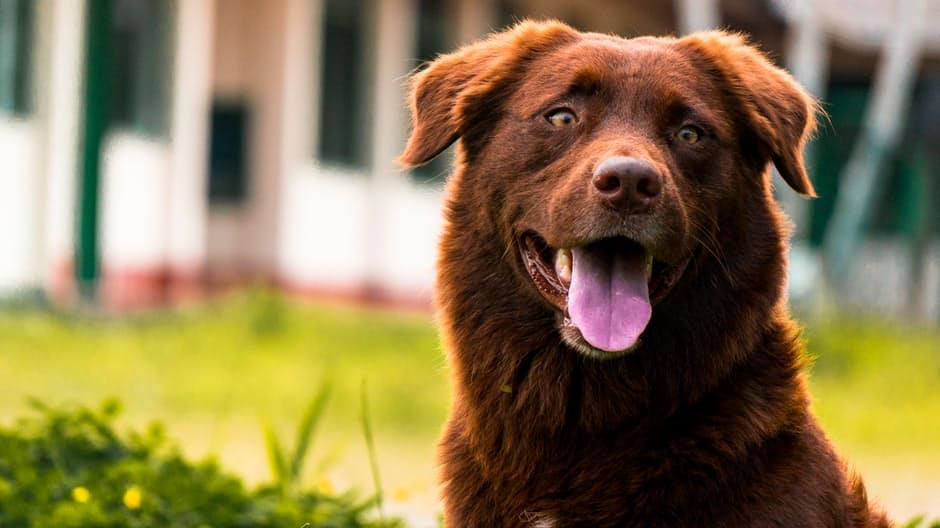 Causas del hipertiroidismo canino