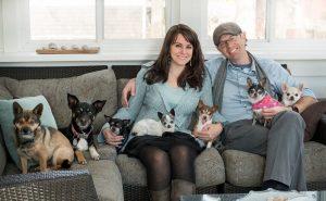 chihuahuas adoptados