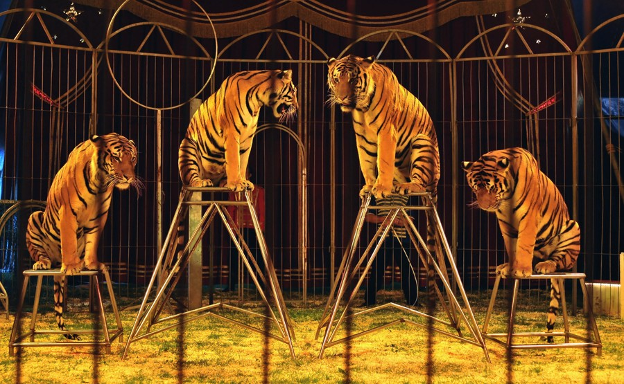 Madrid prohibe los circos con animales