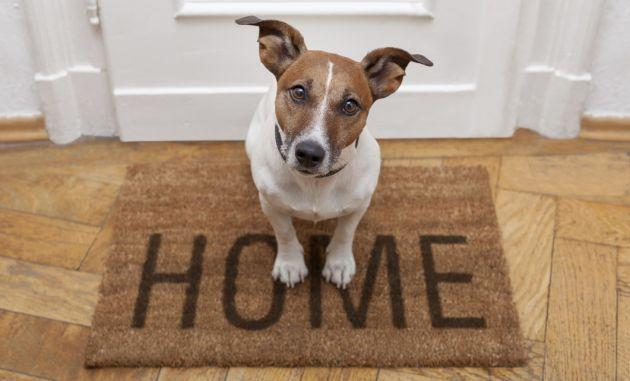 como afectan a los perros las mudanzas