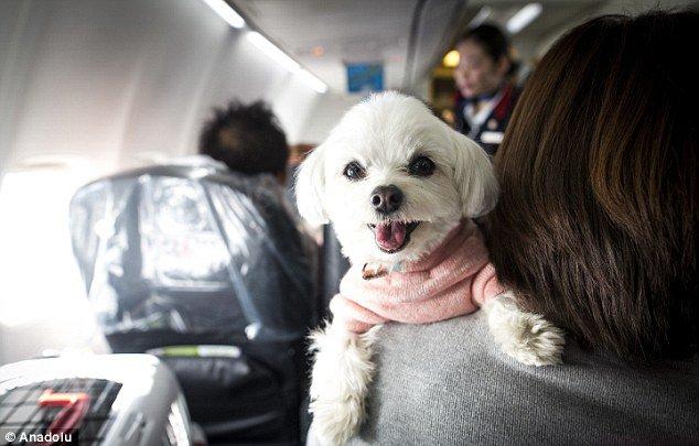 Cómo asegurar la seguridad de las mascotas durante el vuelo