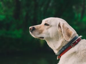 Cómo cuidar a perros ancianos
