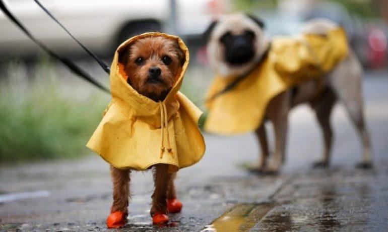 Cómo pasear al perro los días de lluvia