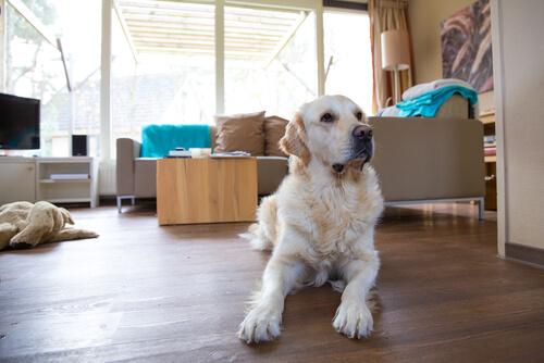 Cómo puedo ayudar a mi perro a adaptarse si me voy a mudar