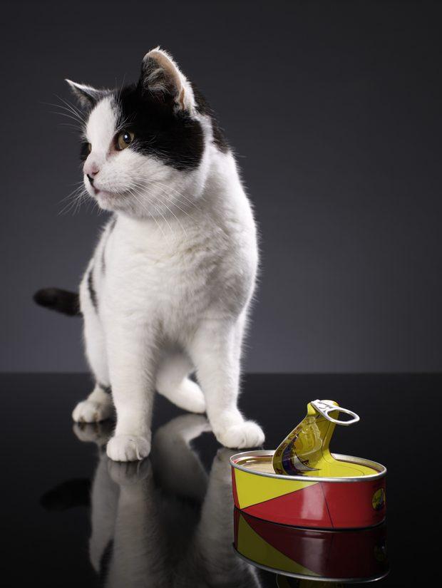 Cómo se hace la mejor golosina para gatos