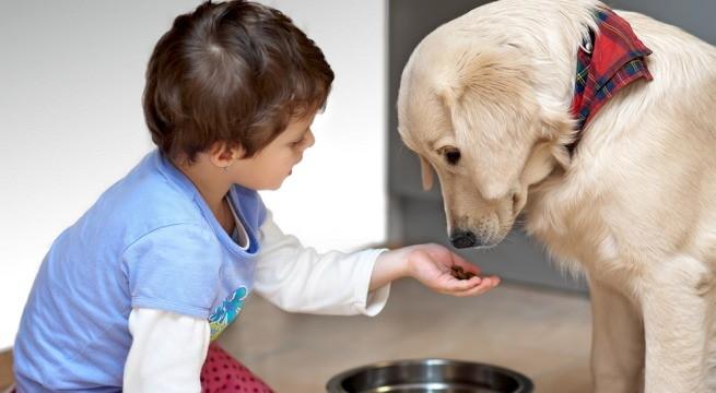 consejos clave para educar a tu perro