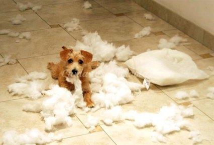 Consejos para evitar que tu perro destroce tu casa