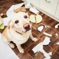 consejos para que tu perro no destroce tu casa cuando no estás