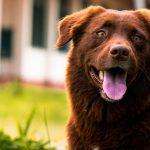 Consejos para quitar el hipo a tu perro