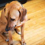 consejos para relajar a un perro nervioso