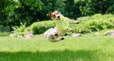 Consejos para tranquilizar a un perro hiperactivo