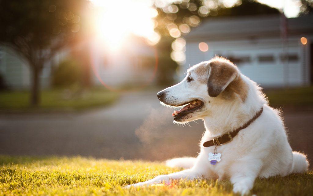 Cumple la ley local que rige sobre tu mascota