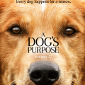 portada pelicula dogs purpose