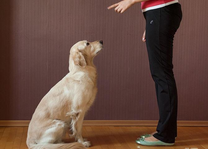 Educa a tu mascota para que te obedezca