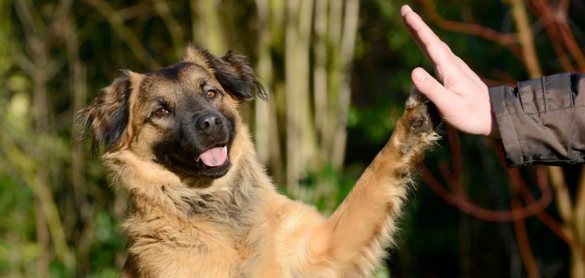 Educa a tu perro paso a paso