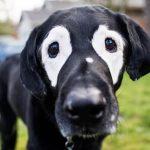 el perro más famoso en las redes sociales