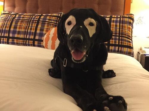 el perro que logró concienciar a la población sobre el vitiligo