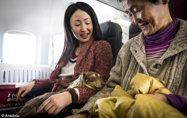El primer vuelo con mascotas a bordo en cabina