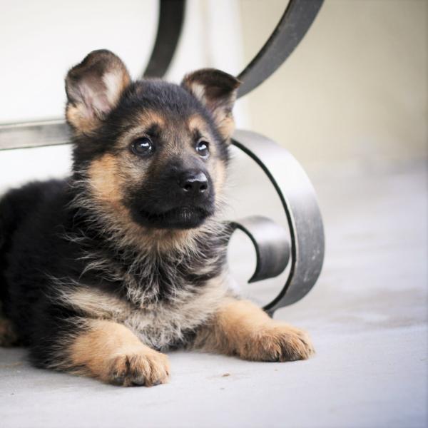 elegir el mejor pienso para perros diabéticos
