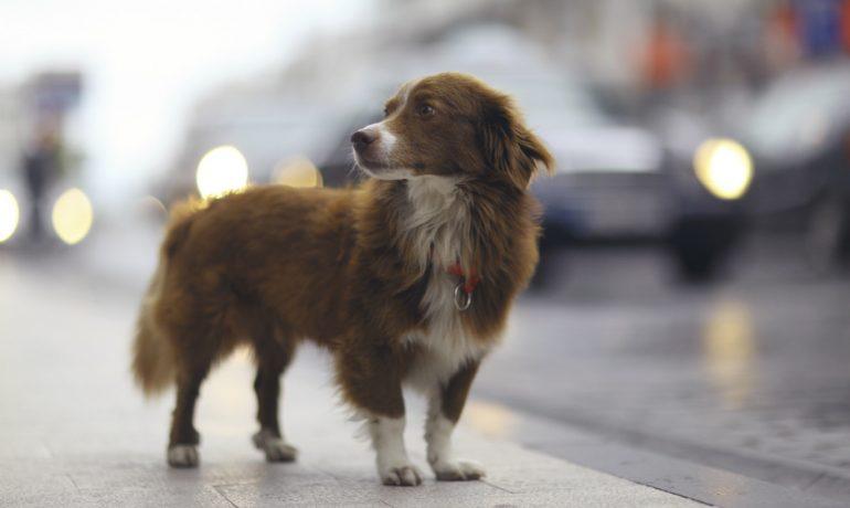 en argentina si adoptas un perro pagas menos impuestos