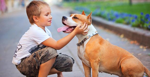 Entendamos las caricias a los perros