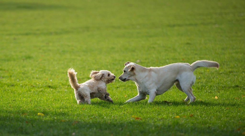 errores que cometes al llevar a tu perro al parque