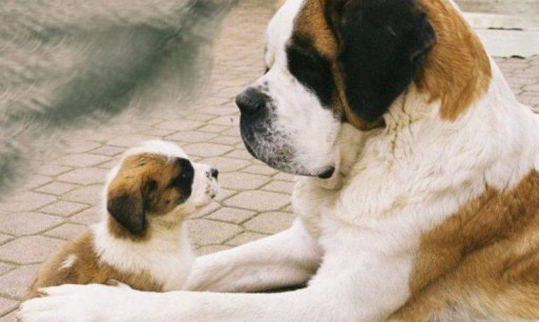 Cómo funciona Rent-a-doggy