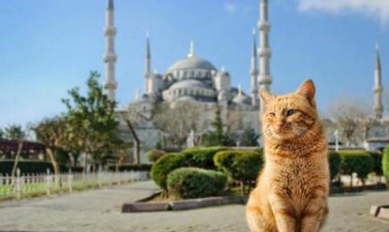 gatos estambul