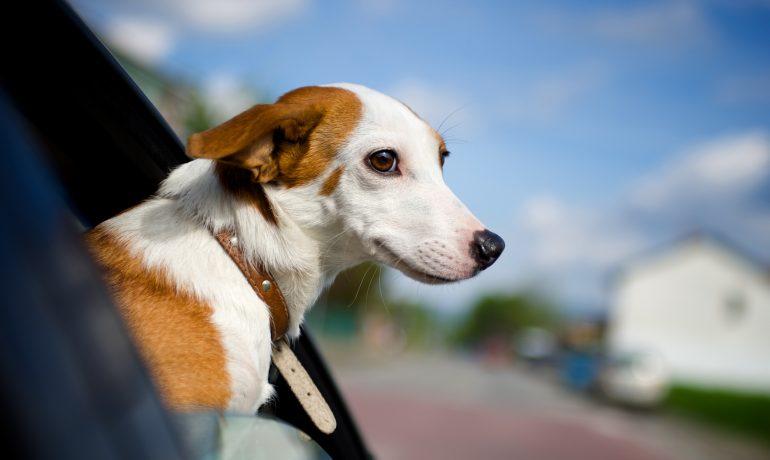 estos consejos pueden salvarle la vida a tu perro