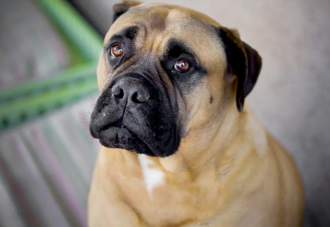 Gases en perros causadas por otra enfermedad