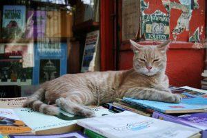 gato libreria