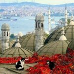 gatos estambul