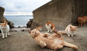 gatos playa