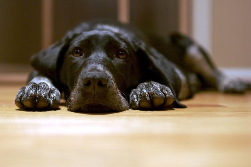 Hablemos de la eutanasia en perros