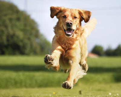 Hasta qué punto son capaces los perros de recordar lo que hacemos