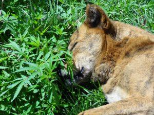 Hay plantas tóxicas para perros