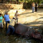 hipopotamo el salvador