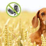 Intolerancia al gluten en perros