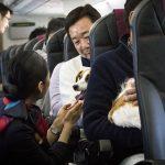Japan airlines permite viajar con mascotas en cabina